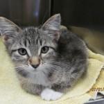 Rockford Veterinary Clinic Kitten in Kennel
