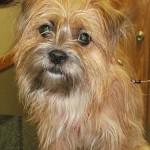 Rockford Veterinary Clinic Photo Gallery