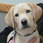 Rockford Veterinary Clinic Photo Gallery Lab