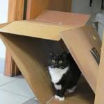 M.J. our clinic cat enjoying the cat life