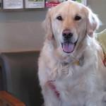 Rockford Veterinary Clinic Photo Gallery Retriever