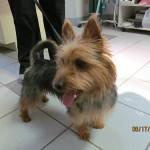 Rockford Veterinary Clinic Photo Gallery Terrier
