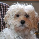 Rockford Veterinary Clinic White dog