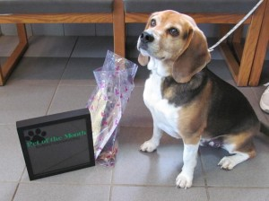 Odie stops by to pick up his special Pet of the Month prizes.