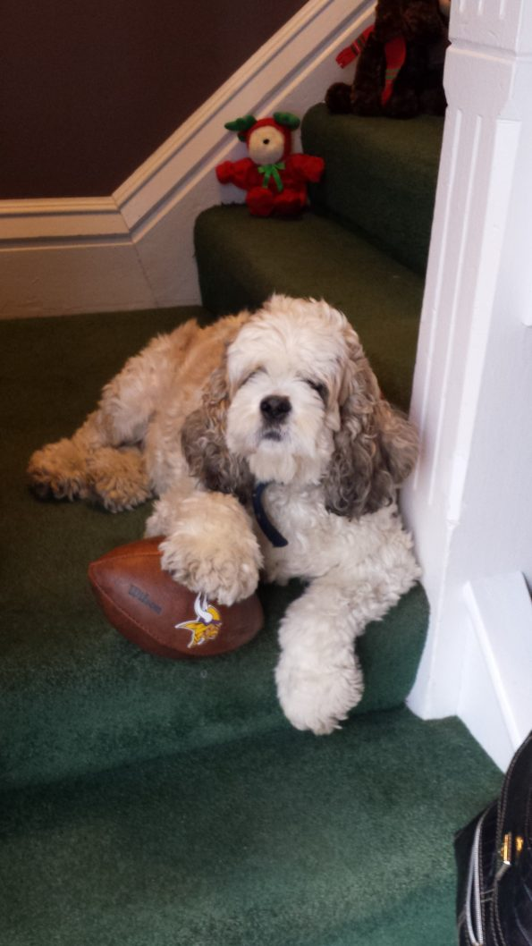 rockford vet clinic staff pet dog football