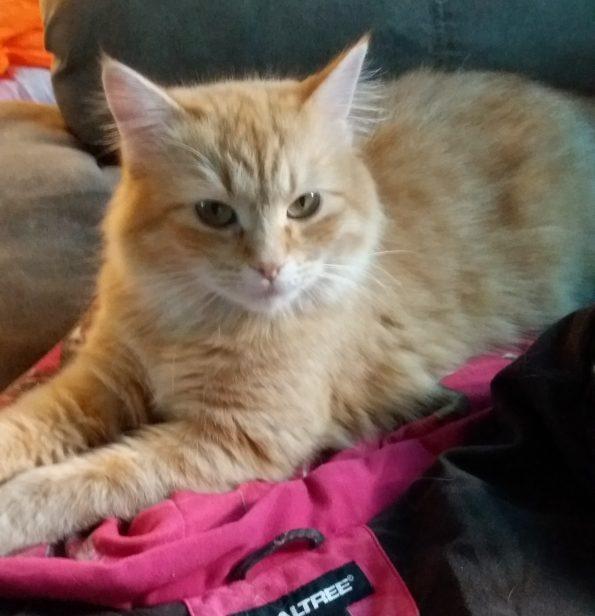 rockford vet clinic cat